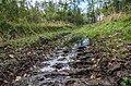 Дорога прокатанная лесопилами - panoramio.jpg