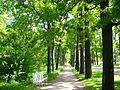 Екатерининский парк - panoramio (1).jpg