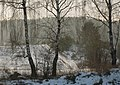 За берёзами. Behind the birches. - panoramio.jpg