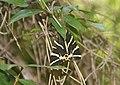 И под каждым, под листом... Epta pigos (7 источников). Archangelos. Rhodos. Greece. Июнь 2014 - panoramio.jpg