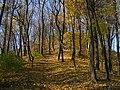 Лиственный лес на склонах горы парка Высокий Замок.jpg