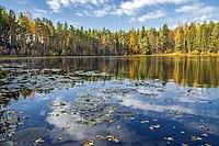 Лопатинское озеро в Оричевском районе.jpg