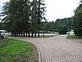 Односторонняя аллея лиственниц на берегу Монастырской бухты.JPG