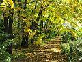 Парк Лисавенко. Осенняя аллея.jpg