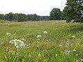 Поле на Выселках - panoramio (1).jpg