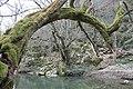 Природата създава мостове.JPG