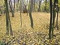 Украина, Киев - Голосеевский лес 75.jpg