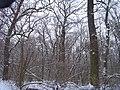 Чернечий Ліс 10.jpg