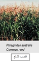 الشكل (2-8-3-1) صور للنباتات المستعملة في الأراضي الرطبة (1) (أ).png