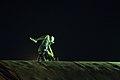 جنگ ورزشی تاپ رایدر، کمیته حرکات نمایشی (ورزش های نمایشی) در شهر کرد (Iran, Shahr Kord city, Freestyle Sports) Top Rider 46.jpg