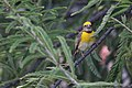 सुगरण पक्षी.jpg