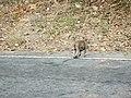 ลิงกับลูกน้อยที่เส้นทางเข้าเจ็ดคต - panoramio.jpg