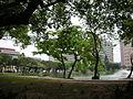 中興大學 National Chung Hsing University - panoramio.jpg