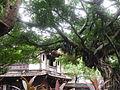 大樹庇護的林家花園.JPG