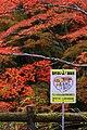 岩屋堂公園 (愛知県瀬戸市岩屋町) - panoramio (21).jpg
