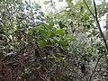 市区内的原生态山林,中国有几座城市有 - panoramio.jpg