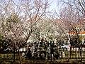 林中的建筑 - panoramio.jpg