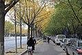 樹木 - panoramio (4).jpg