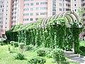 绿色 - panoramio.jpg