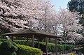 花の文化園 2014.4.01 - panoramio.jpg