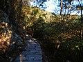鳝溪鼓岭连接线 - Path Connecting Shanxi Brook Trail and Guling Mountain Trail - 2015.01 - panoramio.jpg