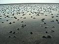 03-07-dagebuell-by-RalfR-149.jpg