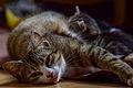1-month-old kittens 01.jpg