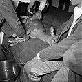 18.05.76 à l'école vétérinaire de Toulouse, opération d'un brocard jeune cerf (1976) - 53Fi892.jpg