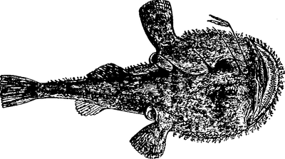 1911 Britannica - Angler.png