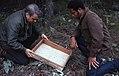 1972. Peter Orr (left) and C. Williams. Douglas-fir tussock moth larvae knockdown. (36339871344).jpg