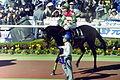 1999-4-11-UmenoFiber.JPG