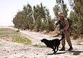 1st LAR Marines patrol through Sre Kala, disrupt enemy activity 120305-M-PH863-024.jpg