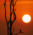 2006-kabini-sunset.jpg
