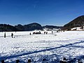 2012 'Seegfrörni' - Türlersee - Hausen am Albis 2012-02-18 12-41-18 (SX230).JPG