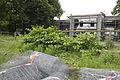 2013 07 15 Bunias Ringwiesen 1062.jpg
