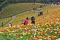 2014-04-04 石象湖 郁金香 liuzusai - panoramio (91).jpg
