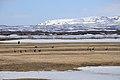 2014-04-28 17-50-48 Iceland - Mývatni Reykjahlíð.JPG