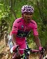 2014 Giro d'Italia, quintana (17600678479).jpg