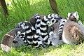 2015-05-24 Vogelpark Marlow 28.jpg
