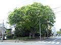 2016 0429 Nakiriyama Amagasaki.jpg