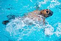 2016 Department of Defense Warrior Games Swimming 160620-D-DB155-005.jpg
