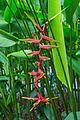2016 Singapur, Ogrody botaniczne (252).jpg