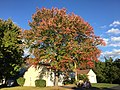 2017-10-24 17 15 19 Red Maple with autumn leaf coloration along Tranquility Lane in the Franklin Farm section of Oak Hill, Fairfax County, Virginia.jpg