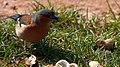 2021-04-03 11-33-12 oiseau.jpg