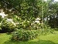 71Mehan Garden Ermita Manila Universidad de Manila 18.jpg
