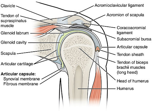 Pain on front of shoulder can be caused by pinching of rotator cuff tendons under the coracoacromial arch of the shoulder.