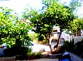 A@a And. collection (my garden) - panoramio (1).jpg