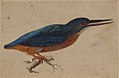 A Kingfisher on a Branch MET 2004.77.jpg