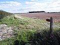 A Yorkshire Wolds' Bridleway - geograph.org.uk - 536537.jpg