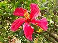 A beautiful flower in Baldha Garden.jpg